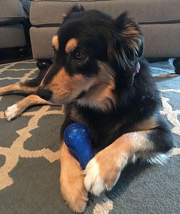 Jason's Dog, Mae