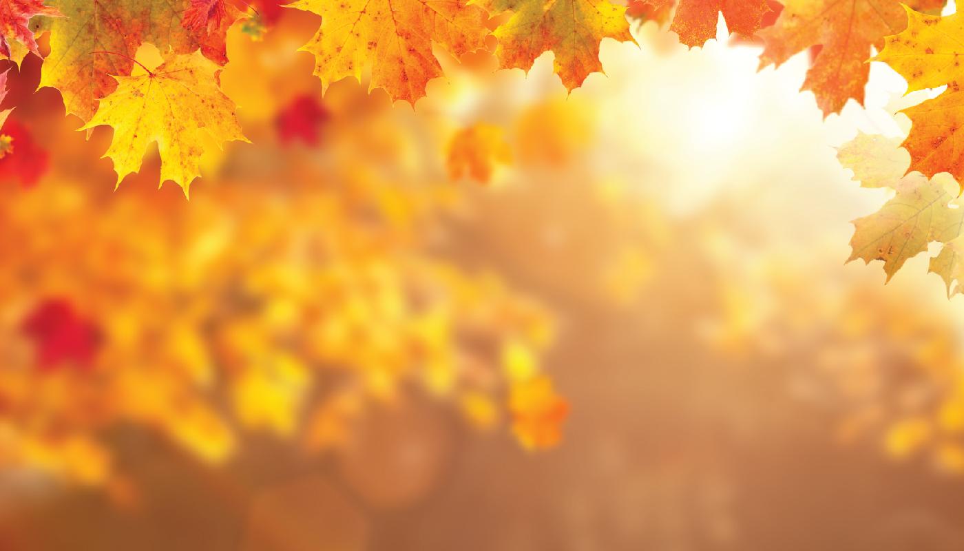Scene of golden autumn leaves
