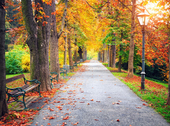 Lovely park during Fall